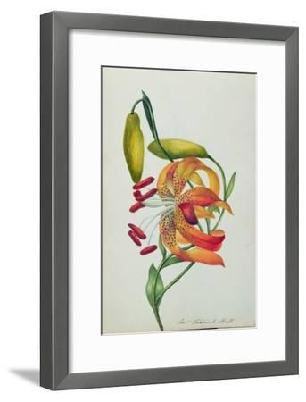 Tiger Lily-Mrs Frederick Hill-Framed Giclee Print