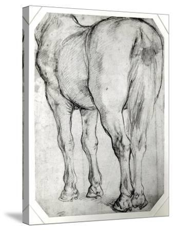 Horse's Rear-Peter Paul Rubens-Stretched Canvas Print