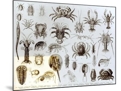 Crustacea and Arachnida--Mounted Giclee Print