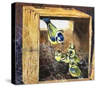Bluetits--Stretched Canvas Print