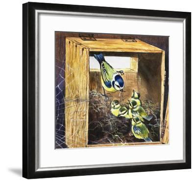 Bluetits--Framed Giclee Print