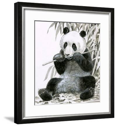 Panda Chewing Bamboo--Framed Giclee Print