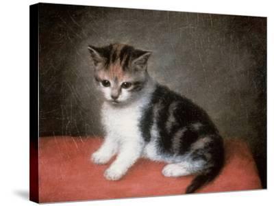 Miss Ann White's Kitten, 1790-George Stubbs-Stretched Canvas Print