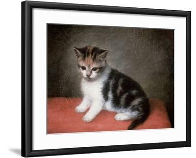 Miss Ann White's Kitten, 1790-George Stubbs-Framed Giclee Print