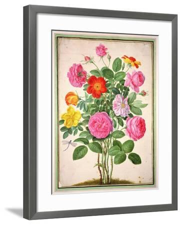 Roses, Plate 4 from the Nassau Florilegium-Johann Jakob Walther-Framed Giclee Print