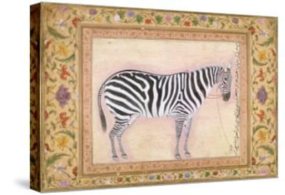 Zebra, from the 'Minto Album', 1621- Mansur-Stretched Canvas Print