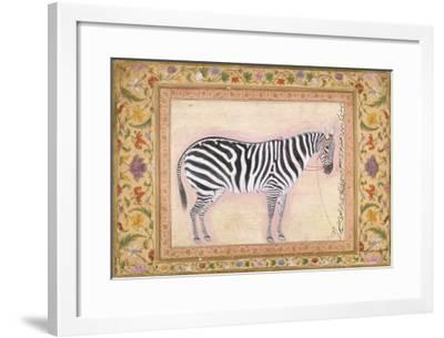 Zebra, from the 'Minto Album', 1621- Mansur-Framed Giclee Print