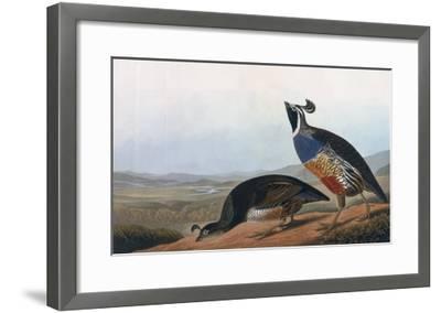 Californian Partridge, from Birds of America, Engraved by Robert Havell-John James Audubon-Framed Giclee Print
