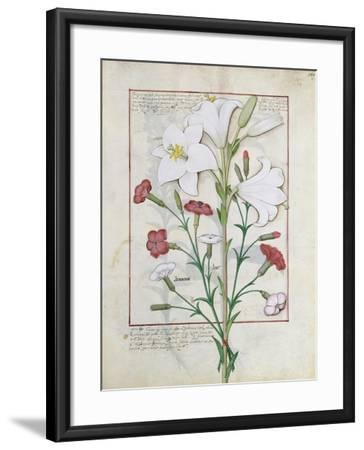 Illustration from the Book of Simple Medicines by Mattheaus Platearius-Robinet Testard-Framed Giclee Print