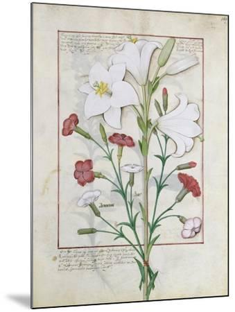 Illustration from the Book of Simple Medicines by Mattheaus Platearius-Robinet Testard-Mounted Giclee Print