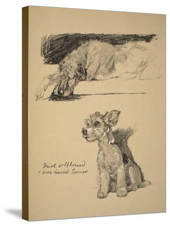 Irish Wolfhound and Wire-Haired Terrier, 1930, Just Among Friends, Aldin, Cecil Charles Windsor-Cecil Aldin-Stretched Canvas Print