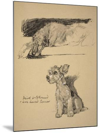 Irish Wolfhound and Wire-Haired Terrier, 1930, Just Among Friends, Aldin, Cecil Charles Windsor-Cecil Aldin-Mounted Giclee Print