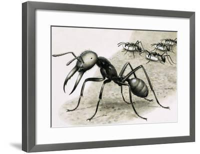 Ants-R. B. Davis-Framed Giclee Print