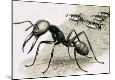 Ants-R. B. Davis-Mounted Giclee Print