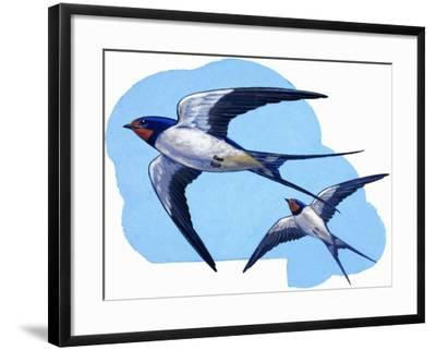 Swallows-R. B. Davis-Framed Giclee Print