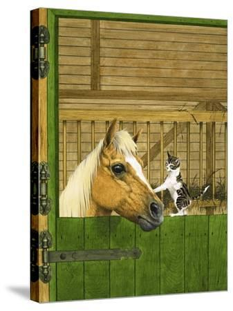 Unidentified Horse and Playful Kitten--Stretched Canvas Print