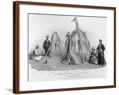 Giraffes with the Arabs Who Brought Them over to Here, Zoological Gardens, Regent's Park, 1836-George The Elder Scharf-Framed Giclee Print
