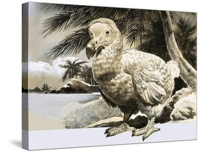 The World of Nature: The Mystery Bird from Mauritius--Stretched Canvas Print