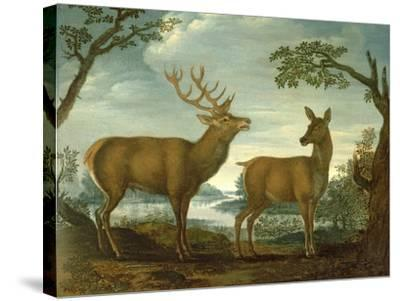 Stag and Hind in a Wooded Landscape--Stretched Canvas Print