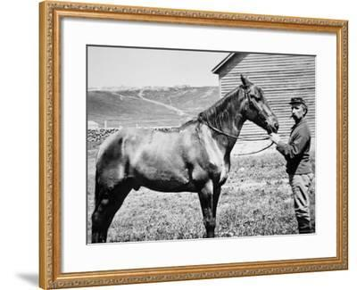 Comanche, Captain Keogh's Mount, the Only Survivor of Custer's Last Stand, 25th June 1876--Framed Photographic Print