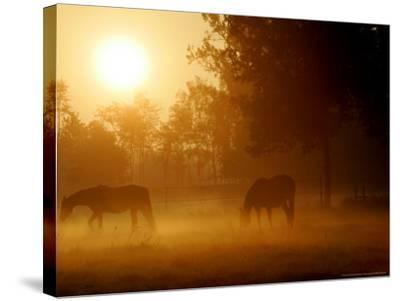 Horses Graze in a Meadow in Early Morning Fog in Langenhagen Near Hanover, Germany, Oct 17, 2006-Kai-uwe Knoth-Stretched Canvas Print