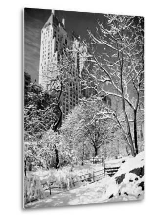 Snow-Covered Trees--Metal Print