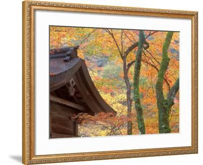 Kibune Shrine, Kyoto, Japan-Rob Tilley-Framed Photographic Print