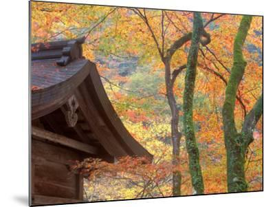 Kibune Shrine, Kyoto, Japan-Rob Tilley-Mounted Photographic Print