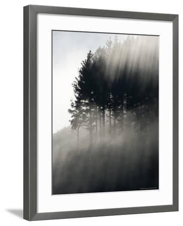 Early Morning Mist and Trees, State Highway 4 near Wanganui, North Island, New Zealand-David Wall-Framed Photographic Print