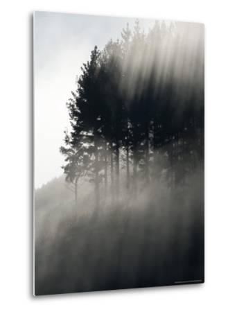 Early Morning Mist and Trees, State Highway 4 near Wanganui, North Island, New Zealand-David Wall-Metal Print