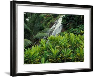 Shaw Park Gardens, Jamaica, Caribbean-Robin Hill-Framed Photographic Print