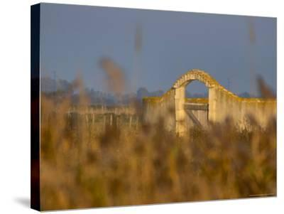 Grasses surrounding Corral Bullring, Camargue, France-Lisa S^ Engelbrecht-Stretched Canvas Print