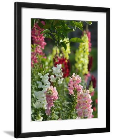 Garden Detail, San Domenico Palace Hotel, Taormina, Sicily, Italy-Walter Bibikow-Framed Photographic Print