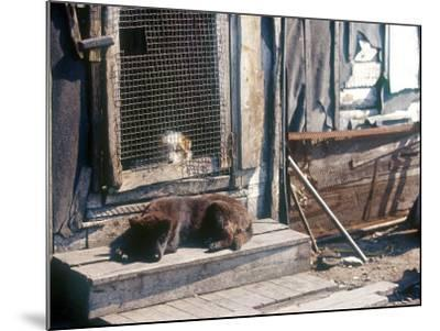 Resting Dog in Yanrakinnot, Providenia District-Daisy Gilardini-Mounted Photographic Print