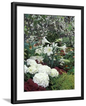 Easter Lilies and Hydrangea Flowers-Adam Jones-Framed Photographic Print