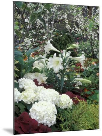 Easter Lilies and Hydrangea Flowers-Adam Jones-Mounted Photographic Print
