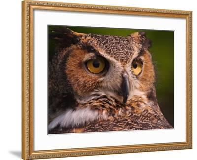 Great Horned Owl-Adam Jones-Framed Photographic Print