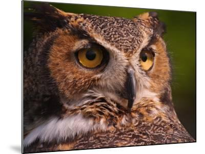Great Horned Owl-Adam Jones-Mounted Photographic Print