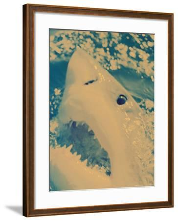 Great White Shark, South Africa-Michele Westmorland-Framed Photographic Print