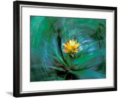 Epiphyte, Barro Colorado Island, Panama-Christian Ziegler-Framed Photographic Print