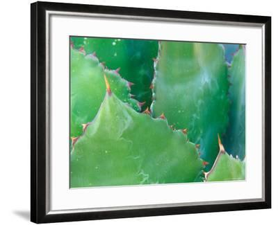 Agave, Sonora Desert Museum, Tucson, Arizona, USA-Rob Tilley-Framed Photographic Print