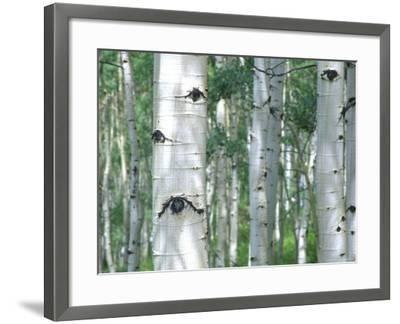 Aspen Grove, Colorado, USA-Julie Eggers-Framed Photographic Print