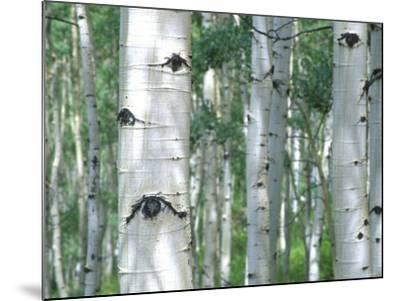 Aspen Grove, Colorado, USA-Julie Eggers-Mounted Photographic Print