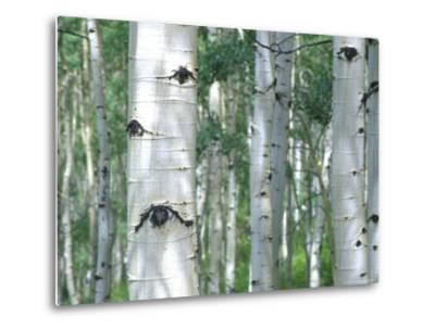 Aspen Grove, Colorado, USA-Julie Eggers-Metal Print