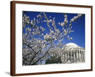 Cherry Blossom Festival and the Jefferson Memorial, Washington DC, USA-Michele Molinari-Framed Photographic Print