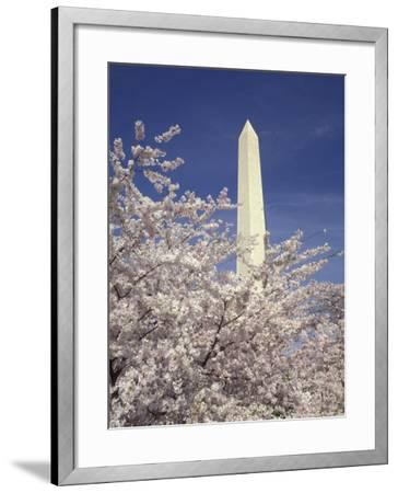 Cherry Blossom Festival and the Washington Monument, Washington DC, USA-Michele Molinari-Framed Photographic Print