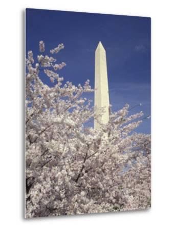 Cherry Blossom Festival and the Washington Monument, Washington DC, USA-Michele Molinari-Metal Print