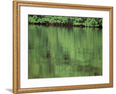 Mangrove, 10,000 Islands, Everglades, Florida, USA-Connie Bransilver-Framed Photographic Print