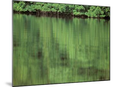 Mangrove, 10,000 Islands, Everglades, Florida, USA-Connie Bransilver-Mounted Photographic Print