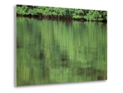 Mangrove, 10,000 Islands, Everglades, Florida, USA-Connie Bransilver-Metal Print
